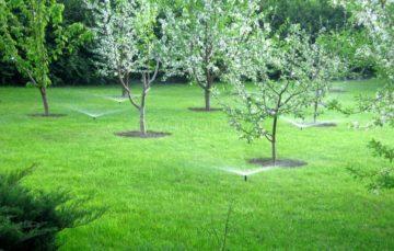 Как организовать полив сада