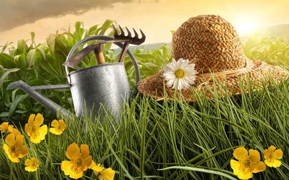 «Огородник.рф» – в помощь дачникам, садоводам и огородникам