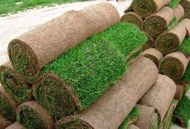 Почему и вы должны постелить рулонный газон на территории вокруг загородного дома?